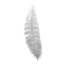 Piuma di struzzo bianca